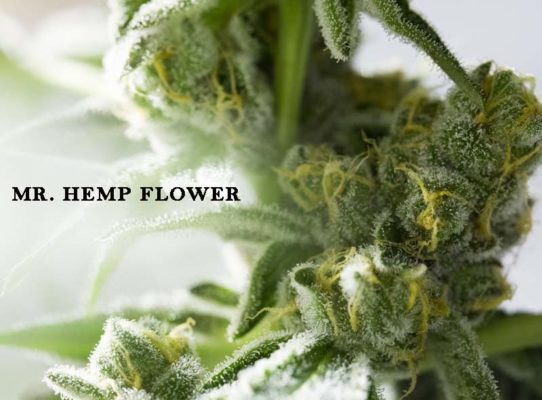 Growing CBD Hemp Flowers