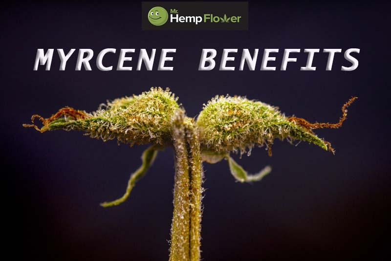 Myrcene Benefits
