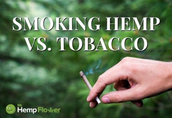 Smoking Hemp vs. Tobacco