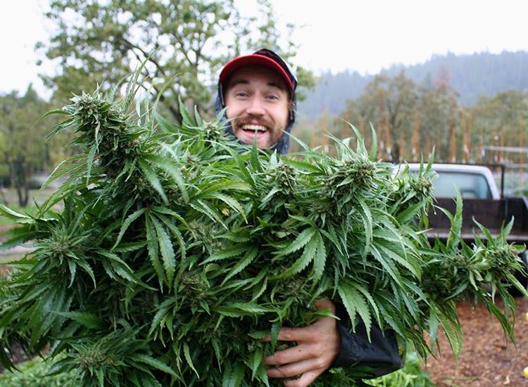 hemp flower farming in colorado