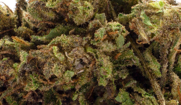 Suver Haze Close Up