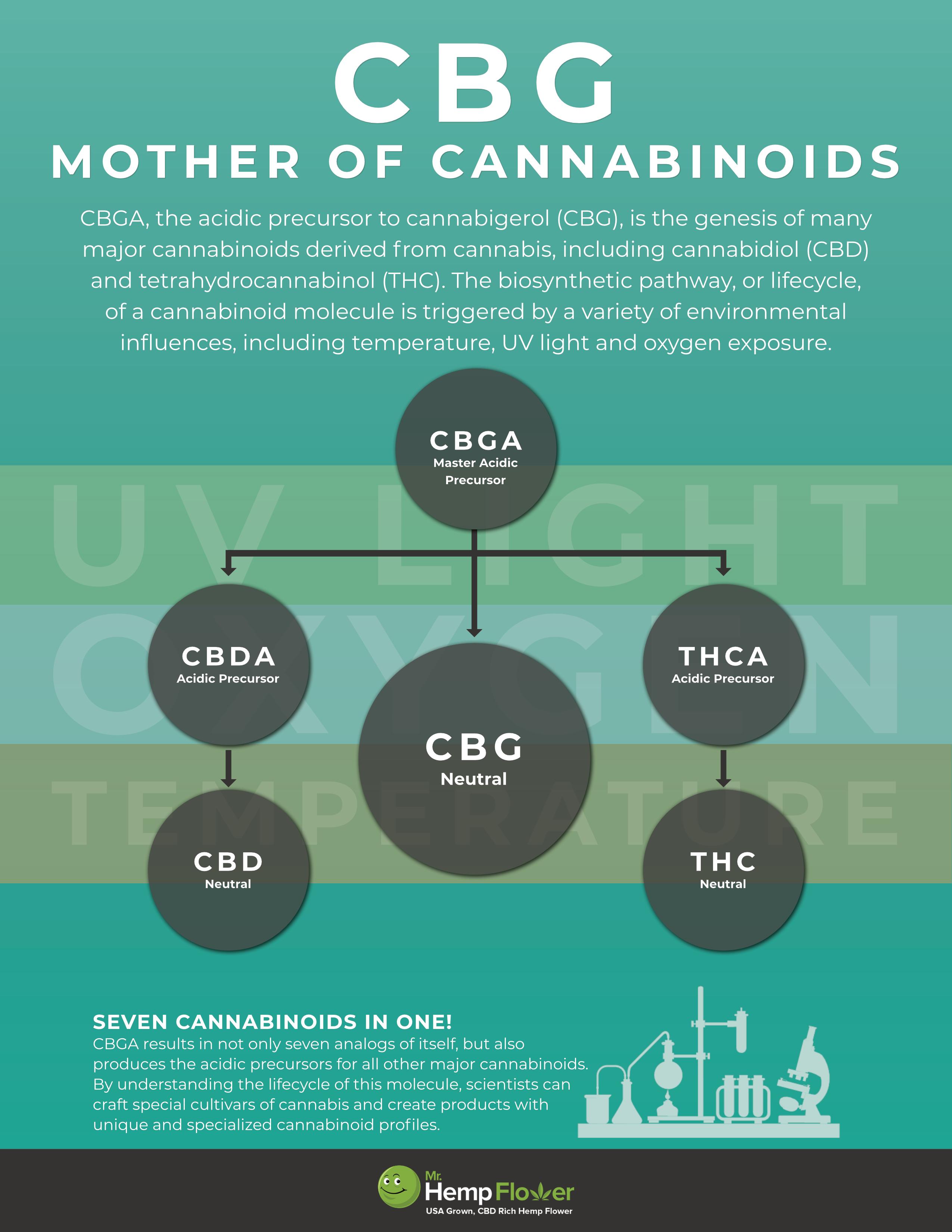 CBG Mother of Cannabinoids