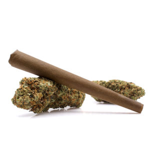 Afghan Maple CBD Hemp Pre-Roll Blunt