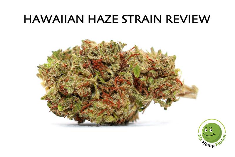 Hawaiian Haze Strain Review