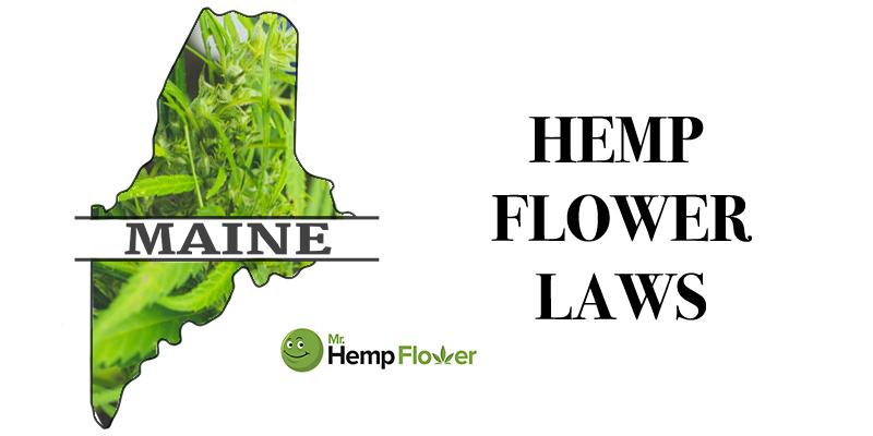 Maine Hemp Flower Laws