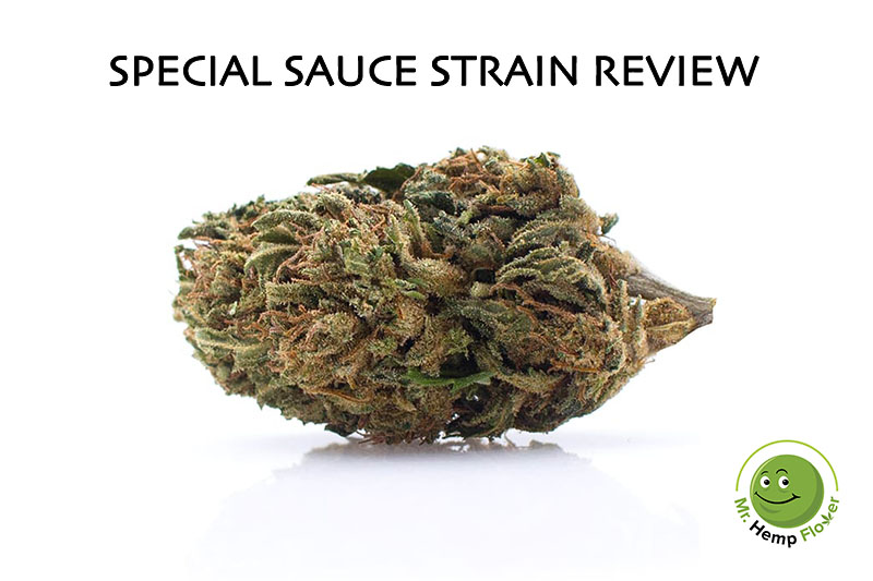 Special Sauce Hemp Strain Review