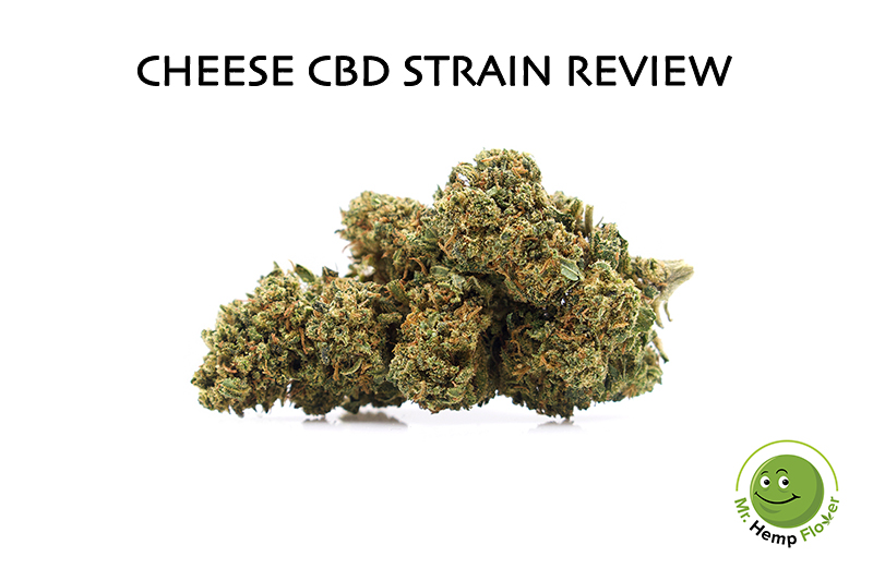 Cheese Strain Review