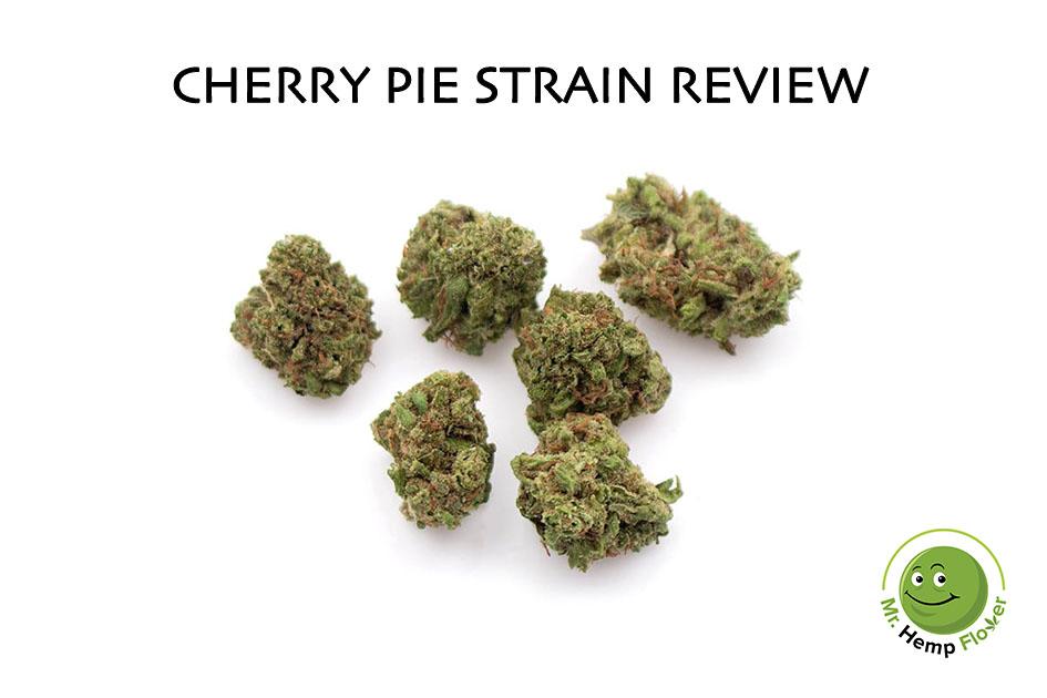 Cherry Pie Hemp Strain Review