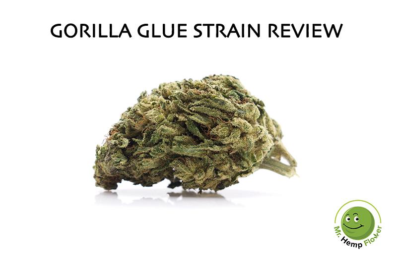 Gorilla Glue Strain Review