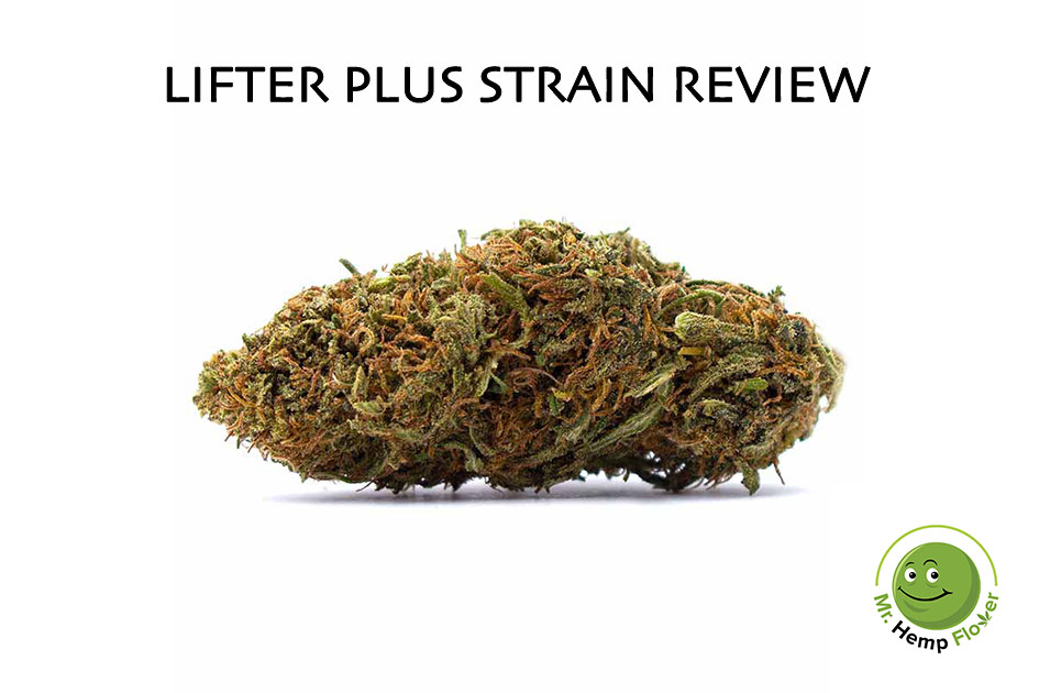 Lifter Plus Hemp Strain Review