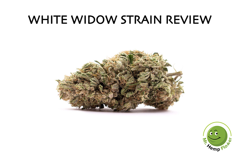 White Widow Hemp Strain Review