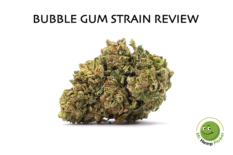 Bubble Gum Hemp Strain Review