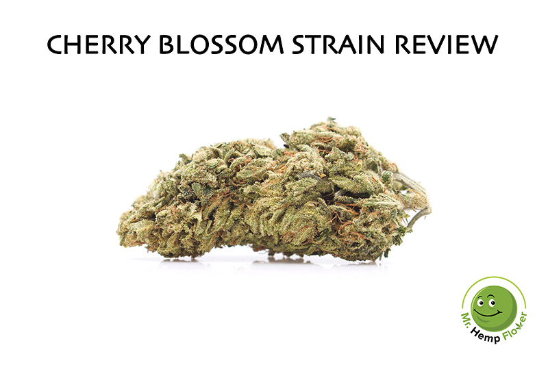 Cherry Blossom Strain Review