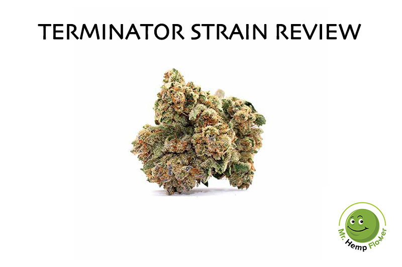 Terminator Strain Review