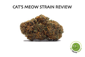 Cat's Meow Strain Review