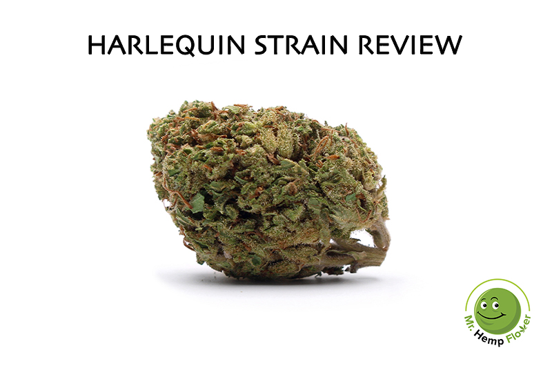 Harlequin Strain Review