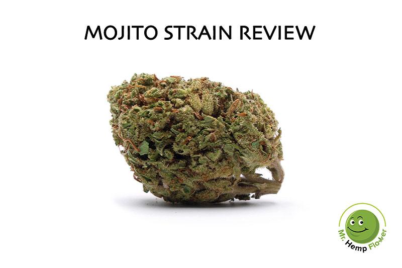 Mojito Strain Review